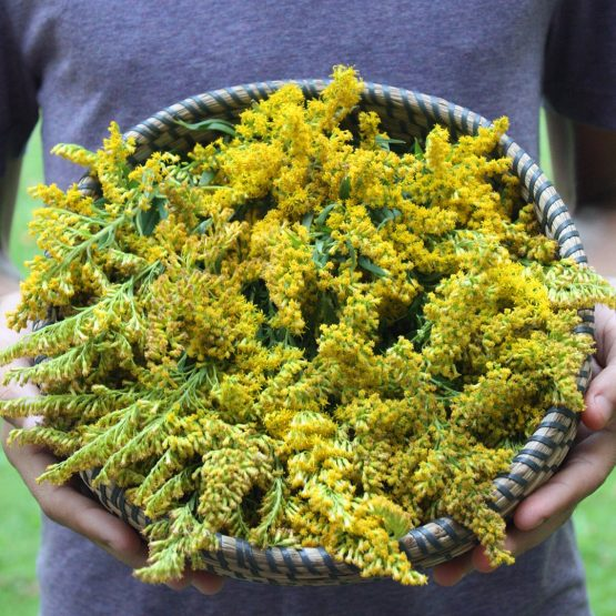 Bowl of Golden Rod